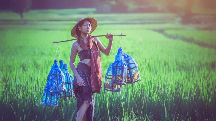 thai woman farmer
